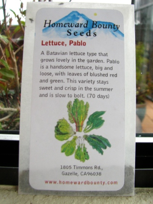 Pablo Lettuce - Homeward Bounty Seeds