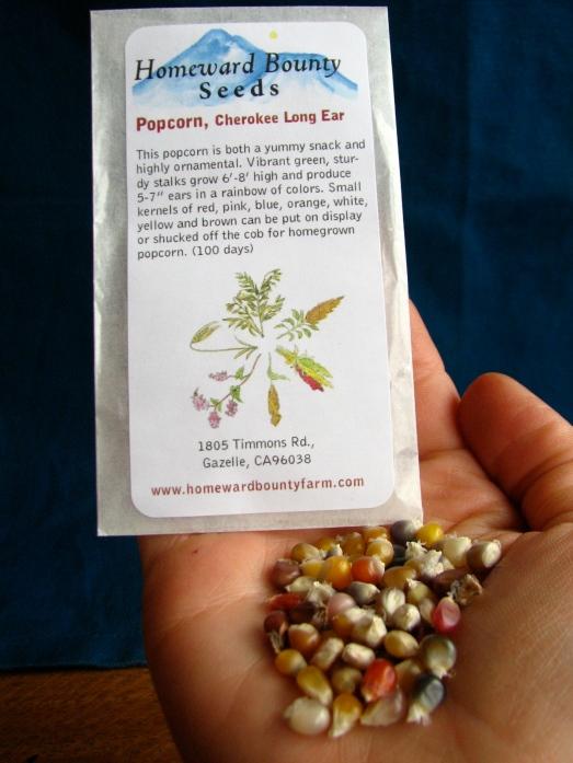 Cherokee Long Ear Popcorn -Homeward Bounty Seeds