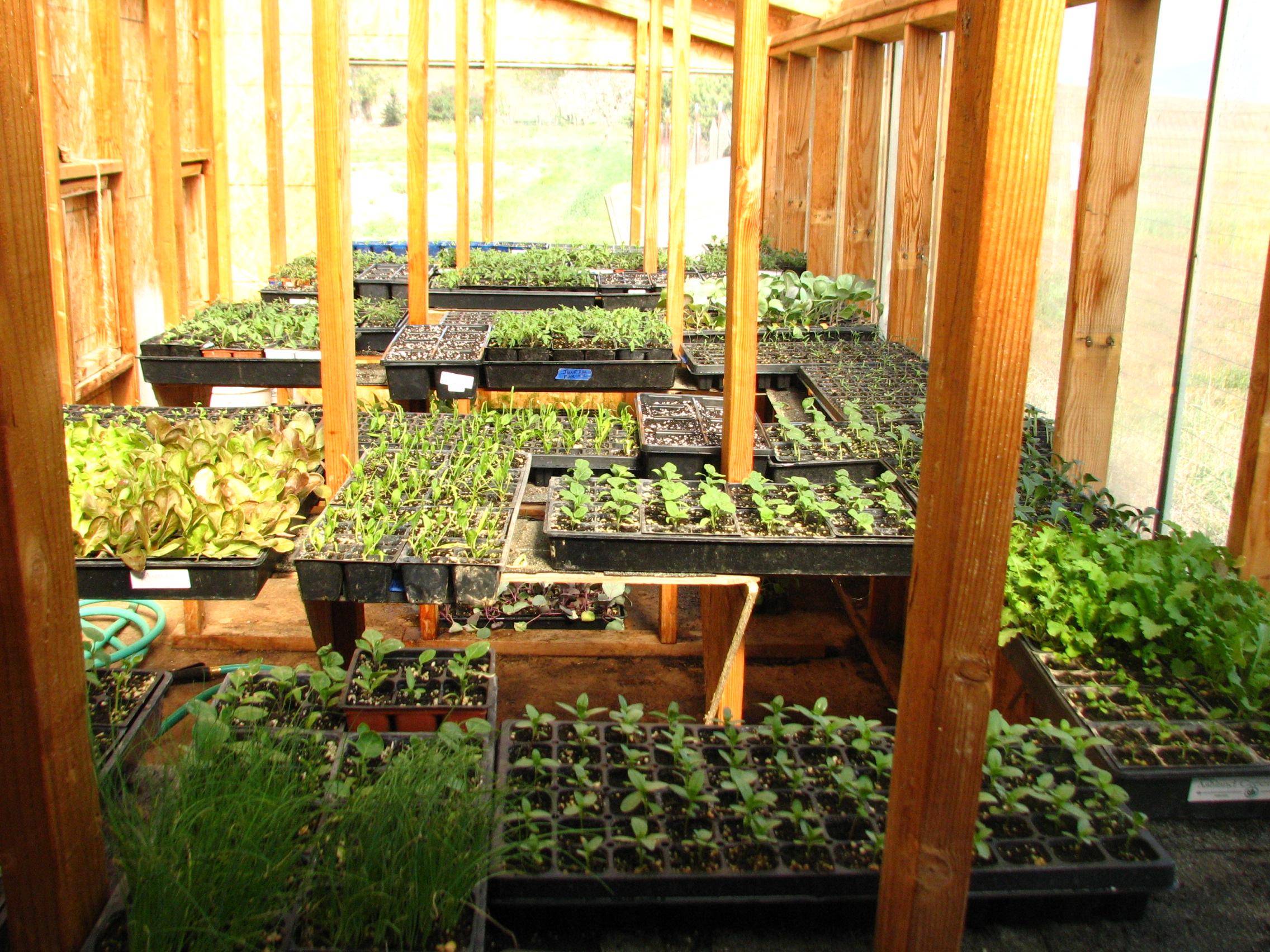 greenhouse homeward bounty farm