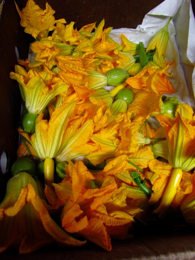Squash Blossoms
