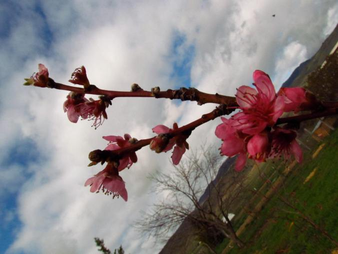 An askew view of spring.