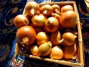 Last basket of 2014 onions.