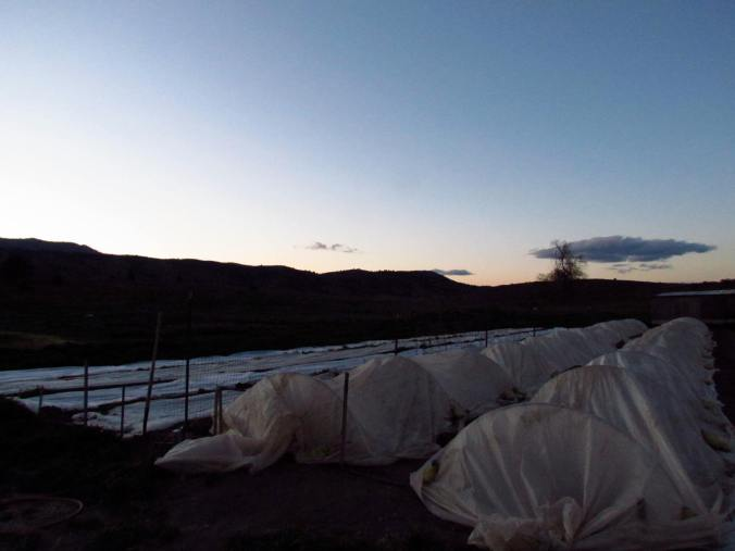 Tucking starts in for the night as the nights are going to dip down to freezing levels.